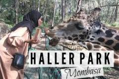 hallar1